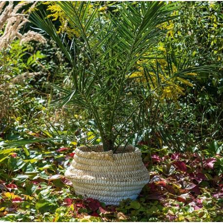 Duża osłonka wiklinowa w jasnych, naturalnych barwach doskonale łaczy się z kwiatami typu paprocie lub egzotyczne palmy. Polceamy do wnętrz i ogrodów!