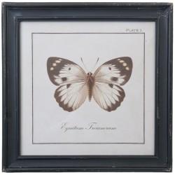 Obraz z Motylem A