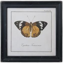 Obraz z Motylem B