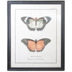 Obraz z Motylami A