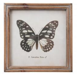 Obrazek z Motylem C