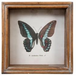 Obrazek z Motylem B