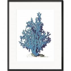 Obraz z Rafą Koralową F
