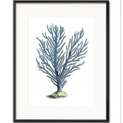 Obraz z Rafą Koralową D