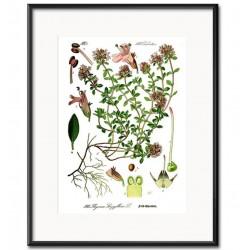 Obraz Vintage z Roślinami E