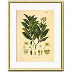 Obraz Retro z Roślinami A