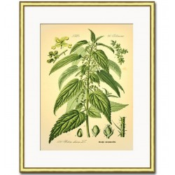 Obraz Retro z Roślinami C