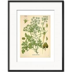 Obraz Retro z Roślinami D
