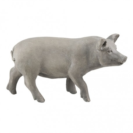Świnka Ozdobna Duża A