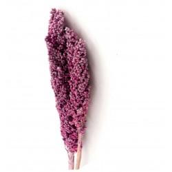 Suszone Gałązki Belldeco Indian Corn Pink 3szt.